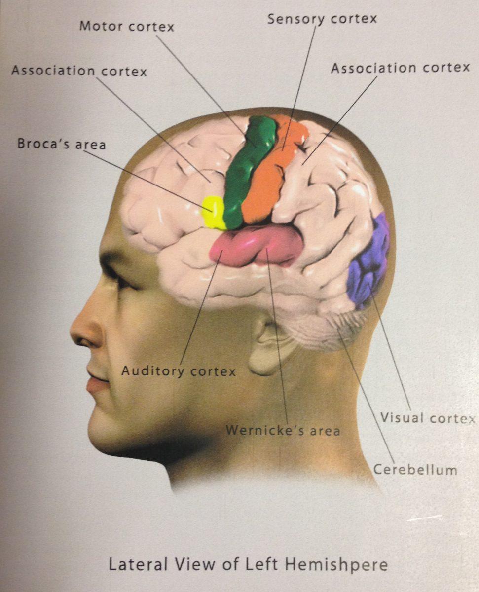 Neuro Acupuncturist in Phoenix, AZ
